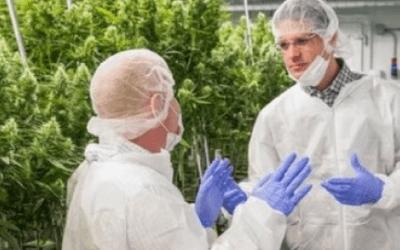 Benefícios da cannabis medicinal
